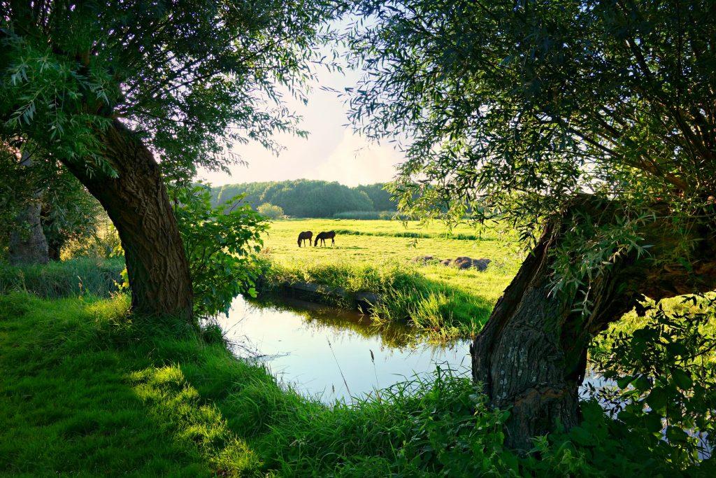 Kreekje met uitzicht op twee paarden
